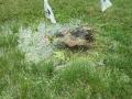 irrigation-repairs5-howell