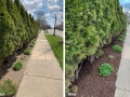 spring-clean-up-mulch-bf-after2