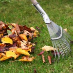 Seasonal Cleanups image
