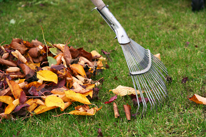 Seasonal Cleanups image