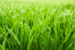 lawn-aeration-howell