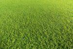 Hydroseeding & Premium Sod in Howell